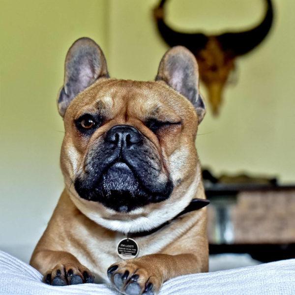 Dierenpenning - hond