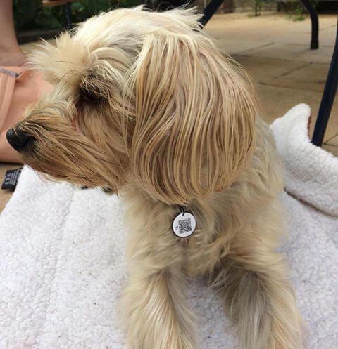 Hond met dierenpenning