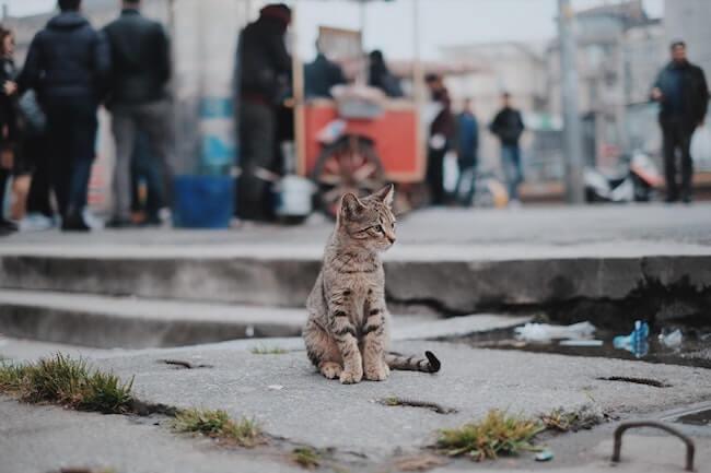 kat vermist